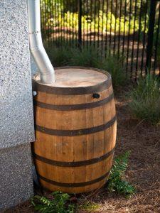 rainwater wine barrel