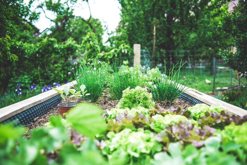 Backayrd Gardening